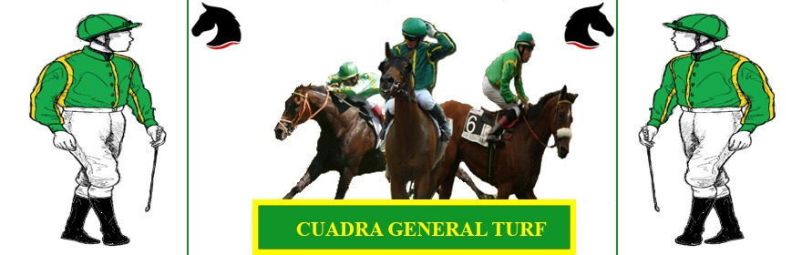 gallery/cuadra general turf
